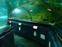 Mundo Submarino de Kelly Tarlton