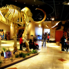 Arizona Museum Of Natural History Lobby