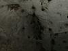 Ashford Caves