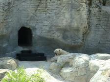 Polar Bear At The Assiniboine Park Zoo