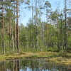 A Swamp Lake In Lauhanvuori National Park