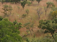 Kourtiagou Reserve