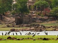 Pocharam Forest & Wildlife Sanctuary