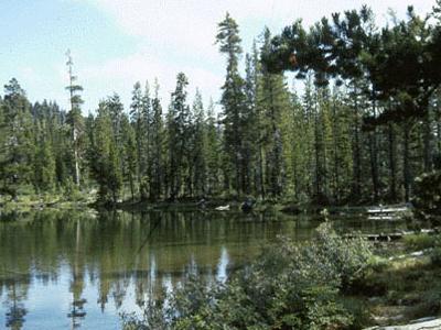 Azalea  Lake