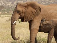 Dine with the Elephants of Samburu