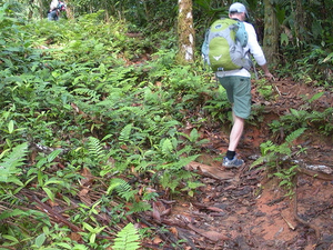 Corcovado National Park-day Tour At Sirena Station Fotos