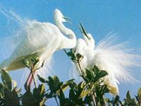 Bac Lieu Bird Sanctuary Reserva Natural