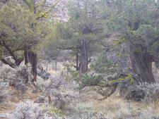Badlands Wilderness