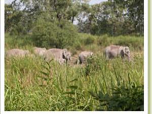 Baghmara Reserva Forestal