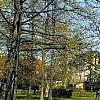 Balatonalmádi Old Park
