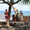 Bali Lovina Beach
