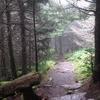Balsam Trail To Mount Mitchell Summit NC