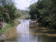 Bamboo Bushes