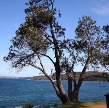 Banksia Point
