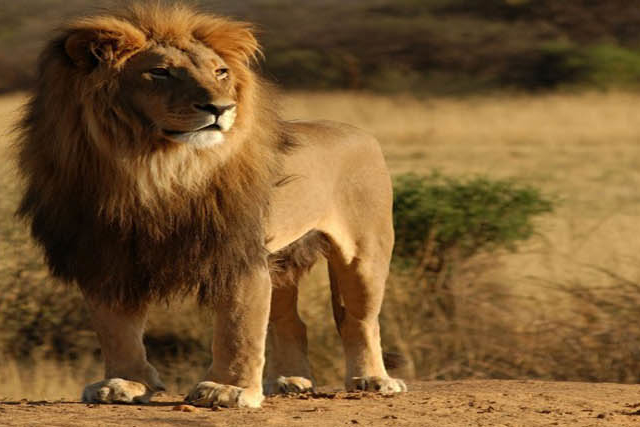 Lion's Land, Gir National Park Tour Photos