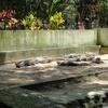 Bannerghata Wildlife Rehabilitation Centre