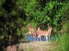 Barda-Hills-Wildlife-Sanctuary