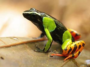 Madagascar Wildlife Tour Photos
