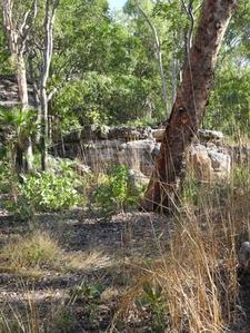 Barrk Bush Trail