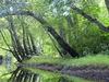 Batsto River