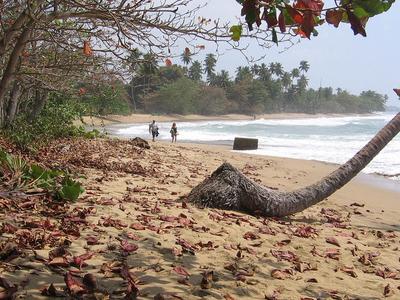 A Beach Scene In Rincon