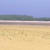Beach View @ Tajpur WB