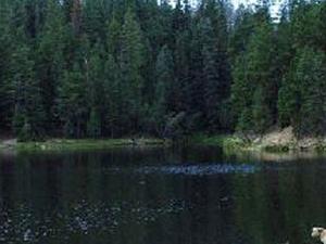 Urso Canyon Lake