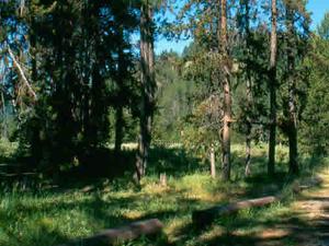 Bear Valley Campground