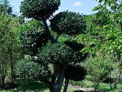 Beautiful Dokmai Garden