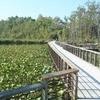 Beaver Marsh & Boardwalk
