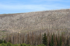 Beaver Pond Loop - Glacier - Montana - United States