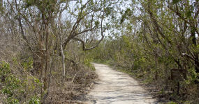 Beginning Of The Rowdy Bend Trail