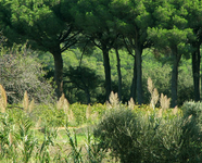 Begur Wildlife Sanctuary