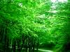 View Of Belgrade Forest