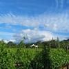 Stellenbosch, Franschhoek & Paarl Valley Wine Day Trip