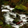 Below Weisendanger Falls OR
