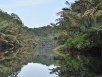 Berbak Parque Nacional