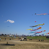 Berkeley Kite Festival