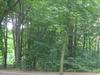 Ludwig Lesser Park
