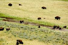 Berry Creek Trail - Grand Tetons - Wyoming - USA