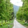 Bhalukpong Tippi