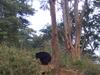Bhejan Borajan Padumoni Wild Life Sanctuary