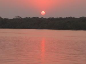 Bhitarkanika manglares