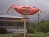 Big (Mud) Crab