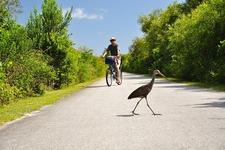 Biking Through Everglades National Park - FL