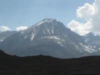 Abedul Montaña