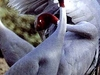 Birds Sanctuary