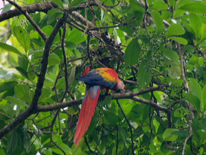 Bird Watching Tour-drake Bay, Costa Rica