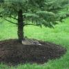 Bir In Wildwood Preserve - Toledo OH