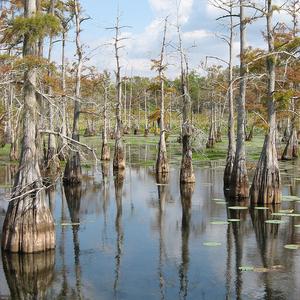 Black Lake Bayou Louisiana